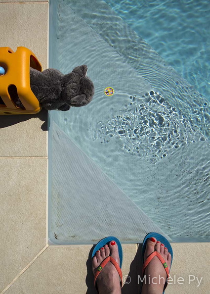 piscine chat 23 bis 2 web.jpg